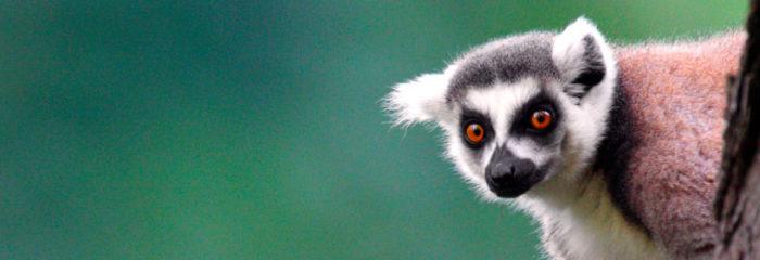30 Best Online Zoology Courses